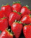 【期間限定】 阪野農園の苺(古都華) 600g【送料無料】 フルーツ 果物 ギフト お歳暮 内祝い お礼 お見舞い お祝い 高級食材 贈り物 …
