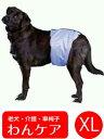 吸収パッド付きマナーベルト(男の子用失禁パンツ) XL(胴周り71〜89cm)【犬用介護用品】【おむつ】 老犬 高齢犬 わんケア マナーバンド…