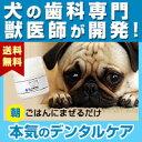 わんこの歯医者さん開発! Dr.YUJIRO デンタルパウダー(朝用)(※約3カ月分) 3000頭以上の犬の歯石除去(歯石取り…