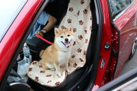 カーシート前座席