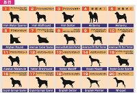 あ行の犬種、犬種別シルエット、カッティングシール、シール、ステッカー、秋田犬、アフガン、アメリカンコッカー、イングリッシュセッター、ウエルッシュコーギー