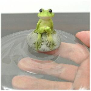 水面にちょこんと座っているカエル
