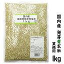 国内産 発芽青玄米 1キロ(メール便発送で送料無料)