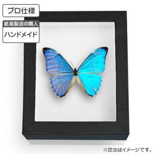 【プロ仕様】職人ハンドメイド「標本箱」