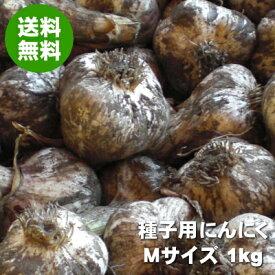 青森にんにく 種子用 Mサイズ 1kg 福地ホワイト六片(たね・種球)令和3年【送料無料】
