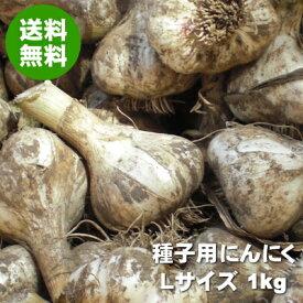 【完全予約制】2020年産『青森県産種子用にんにく(品種:福地ホワイト六片種)』Lサイズ1kg(簡易栽培マニュアル付)【送料無料】