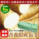 【送料無料】減農薬栽培の特選ながいも『青森県産まほろば長芋:贈答用2Lサイズ』3kg[※破損防止・保存用としておがく…