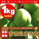 【送料無料】青森県産青梅(品種:豊後梅)SMサイズ混合1kg[※クール便対応]