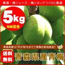 【送料無料】青森県産青梅(品種:豊後梅)SMサイズ混合5kg[※クール便対応]