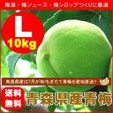 【送料無料】青森県産青梅(品種:豊後梅)Lサイズ10kg[※クール便対応]