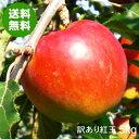 【送料無料】青森県産りんご紅玉加工用訳あり品約5kg[バラ入り・さび・黒ほし・色むら・枝傷有]令和元年産