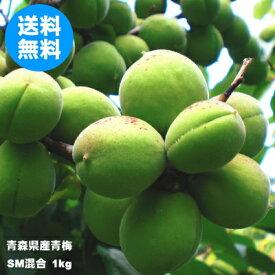 青森県産青梅 SMサイズ混合 1kg(品種:豊後梅)【クール冷蔵便送料無料】