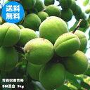 青森県産青梅 SMサイズ混合 3kg(品種:豊後梅)【クール冷蔵便送料無料】