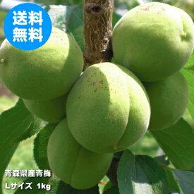 青森県産青梅 Lサイズ 1kg(品種:豊後梅)【クール冷蔵便送料無料】