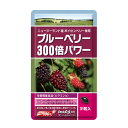 ブルーベリー300倍パワー ボイセンベリー サプリメント ポリフェノール エラグ酸 栄養機能食品 31粒入 1ヶ月分【送料…