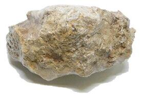 神畑養魚 カミハタ アクアリウムロック 木化石 (1個) 観賞魚用 水槽アクセサリー