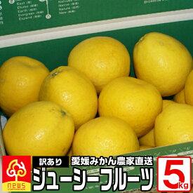 訳あり 河内晩柑 ジューシーフルーツ 5kg 国産 愛媛産 無添加 南の果樹園 ニュウズ
