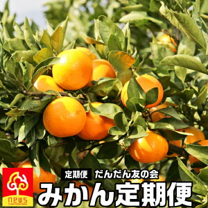 送料無料 旬のみかん頒布会 柑橘 定期便 月替わり