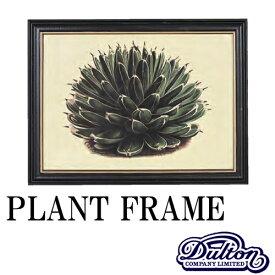 PLANT FRAME プラントフレーム [Type-A]【ダルトン DULTON】ボタニカル アート 植物画 芸術 生き物 観葉植物 額装