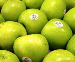 しっかり果肉と酸味でアップルパイなどに最適!グラニースミス30玉