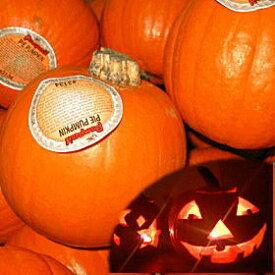★ハロウィン用かぼちゃ【ミニ】1個/アメリカ産ジャックオランタンでハロウィンを盛り上げよう!***順次発送します。ご指定可!***◎