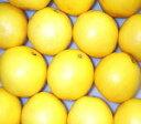 ★フロリダ産ホワイトグレープフルーツS48個/約17kg