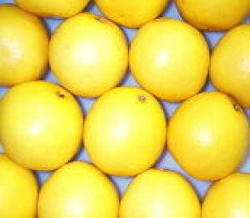 ★フロリダ産ホワイトグレープフルーツS10個/約3.5kg