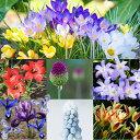 【花苗】植え球根 芽出しポット植え 球根 選べる14品種 【お届け中】MuscariValeriefinnis ムスカリ バレリーフィ…