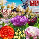 【秋植え 球根】チューリップ球根セット選べる全17セット【お届け中】原種チューリップ 八重咲きチューリップ 枝咲き…