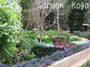 花苗 ベロニカ オックスフォードブルー 6鉢 セット 1鉢3.5号 【お届け中】 青花 Veronica peduncularis Oxford Blue …