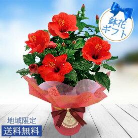 母の日 ギフト 鉢花 インドア ハイビスカス サニーシリーズ 選べる4品種 5号鉢 母の日 鉢植え プレゼント 花鉢 ギフト 母の日プレゼント フラワーギフト 贈り物 同梱不可