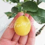 果樹キンカンライム1鉢5号【お届け中】金柑ライム