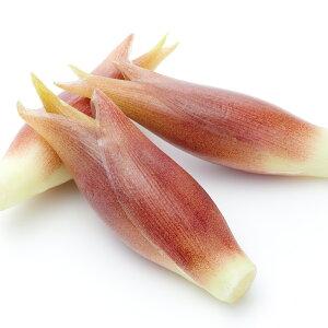 夏の香味野菜 ミョウガ 茗荷 苗1鉢1芽 野菜苗 【お届け中】