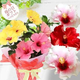 早割 母の日 母の日ギフト 鉢花 珍しい ハイビスカス ロングライフ 選べる7種 1鉢 2色植え 5号【先行予約 母の日期間5月5〜9日お届け 送料無料】鉢植え 花鉢 プレゼント フラワーギフト お花 贈り物