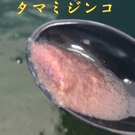 凄い売れてます!【タマミジンコ】ミジンコ 10,000匹 活餌 鮮度抜群!生体、めだかの餌、金魚の餌、熱帯魚の餌など万能餌!高栄養、色揚げ、産卵促進にも