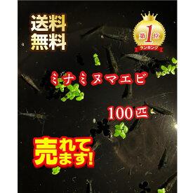 【送料無料】ミナミヌマエビ100匹+10匹 メダカのお供に