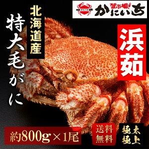 特大毛蟹 北海道産 一尾(約800g) 浜茹で 送料無料 けがに 毛ガニ