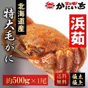 特大毛蟹 北海道産 一尾(約500g) 浜茹で 送料無料 けがに 毛ガニ