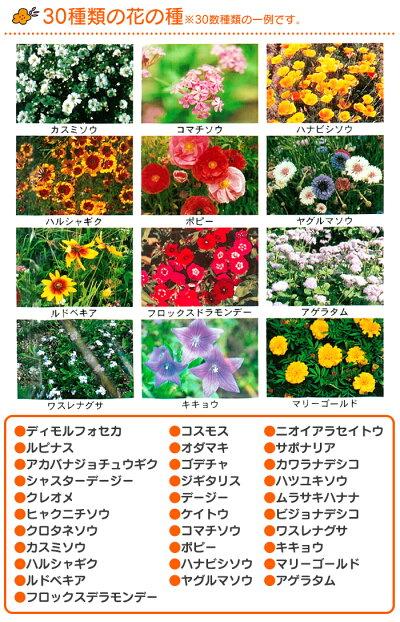 花の種ブレンドパックフラワリーランド25位花の種子20180820