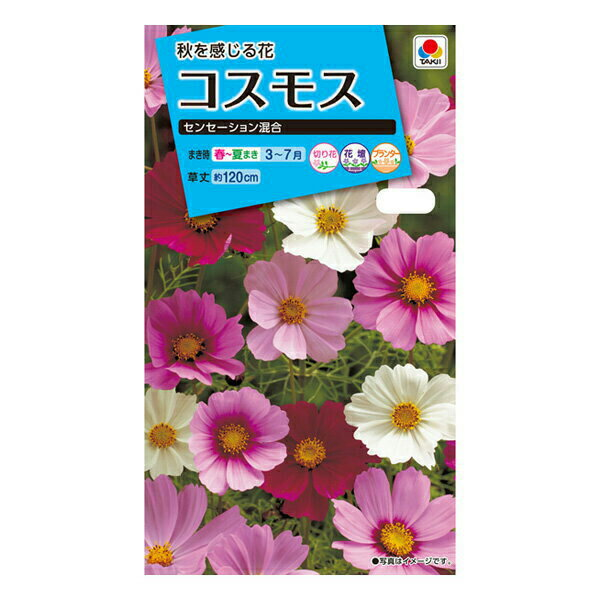 【A】タキイ種苗 花種 コスモス センセーション混合 メール便対応 (B02-053)