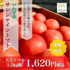 御中元 ワンダーファーム サンシャイントマト A品 1.5kg お取り寄せ 野菜 ギフト トマト