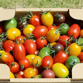 ミニトマトミックス 1.7kg お取り寄せ 野菜 ギフト ミニトマト ふくしまプライド