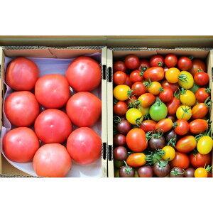 ワンダーファーム サンシャイントマト詰め合わせ お取り寄せ 野菜 ギフト トマト ミニトマト 母の日