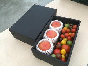 送料無料 サンシャイントマトギフトボックス ギフト ワンダーファーム ミニトマト トマト いわき