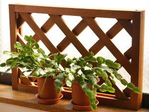 【ガーデンアクセサリー】【木製ラチス】【日本製】枠付きラチス