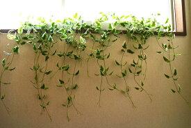 【グリーン壁掛】人工観葉植物 【置きにも・壁にも】【5種よりお選び下さい】涼しい グリーンカーテン 3980円