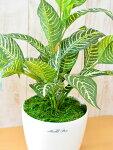 【人工観葉植物テーブルゼブラ60cm】インテリアグリーンUDD触媒加工【送料込み】