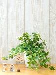 人工観葉植物テーブルポトス造花UDD触媒加工【送料込み】