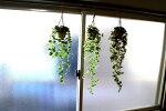 【人工観葉植物】【ハンギンググリーン】【3柄よりお選び下さい】