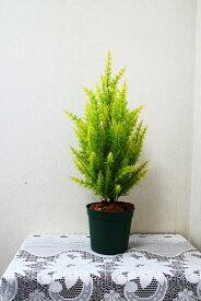 【人工観葉植物】【ゴールドクレスト】【70cm】【屋外使用可】【送料無料¥4980】